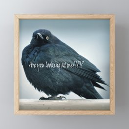 Are You Looking At Me???? Framed Mini Art Print