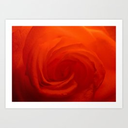 Petal Swirl Art Print
