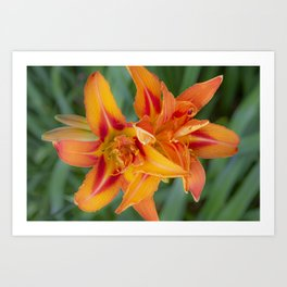 Garden Flora Art Print