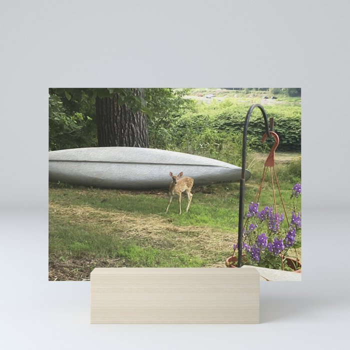 Curious Spotted Fawn Mini Art Print