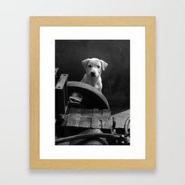 Junkyard stray bw Framed Art Print