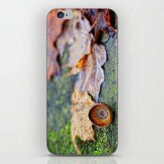 Shaking down the acorns iPhone & iPod Skin