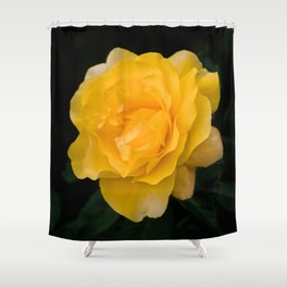Happy Go Lucky yellow rose for flower enthusiast Shower Curtain