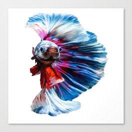 Magnificent Betta Splendens Freshwater Fish Canvas Print