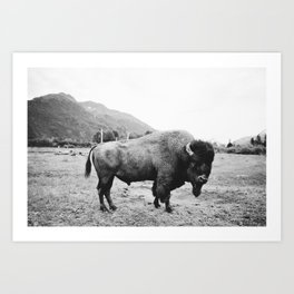Alaska Bison Art Print