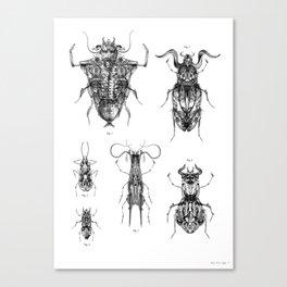 Entomologic Bones Canvas Print
