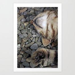 Ecstatic cat Art Print