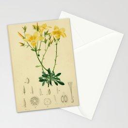 Flower linum glandulosum19 Stationery Cards