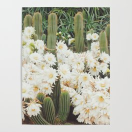 Cactus and Flowers Poster