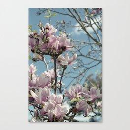 Glorious Magnolias Canvas Print