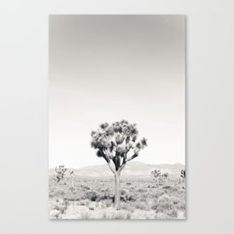 Joshua Tree B&W Canvas Print
