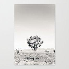Joshua Tree B&W Canvas Print