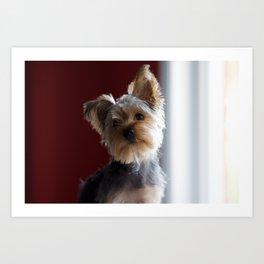 A Dog Named Dante Art Print