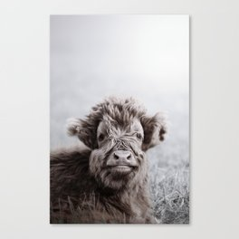 HIGHLAND CATTLE CALF ALF Canvas Print