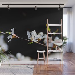 Nice White Japanese Apricot Flower Against The Black Background Wall Mural