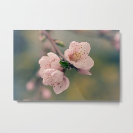 Flowering Tree Metal Print