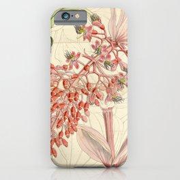 Flower 4533 medinilla magnifica Magnificent Medinilla1 iPhone Case