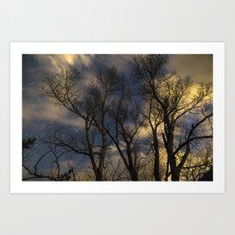 Enchanting Nighttime Trees and Sky Art Print