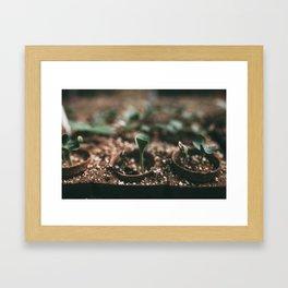 Seedlings Framed Art Print