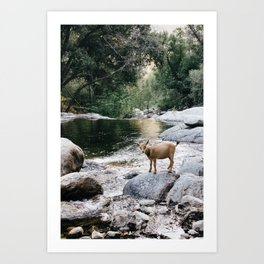 goat creek Art Print