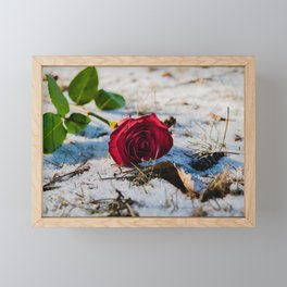 Roses in the snow Framed Mini Art Print