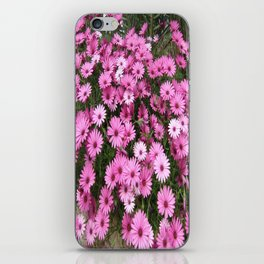 DAISIES IN PINK iPhone Skin