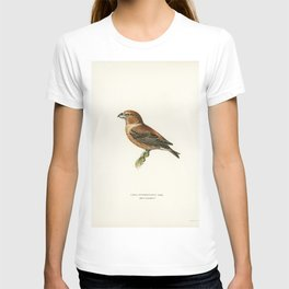 Caspian lern (HYDROPROGNE CASPIA) illustrated by the von Wright brothers T-shirt