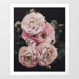Pink Ranunculus Flowers Art Print