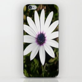 White African Daisy iPhone Skin