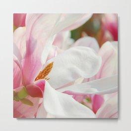Magnolia 143 Metal Print
