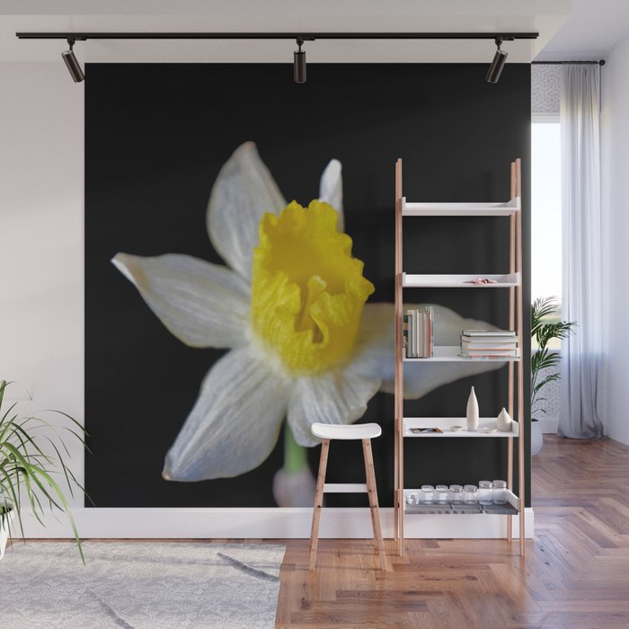 Dainty Daffodil On Black Wall Mural