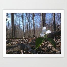 Trillium Fighting Spring Art Print