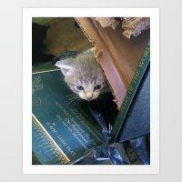 Peeking Kitten Art Print
