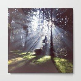 Sun rays through trees Metal Print