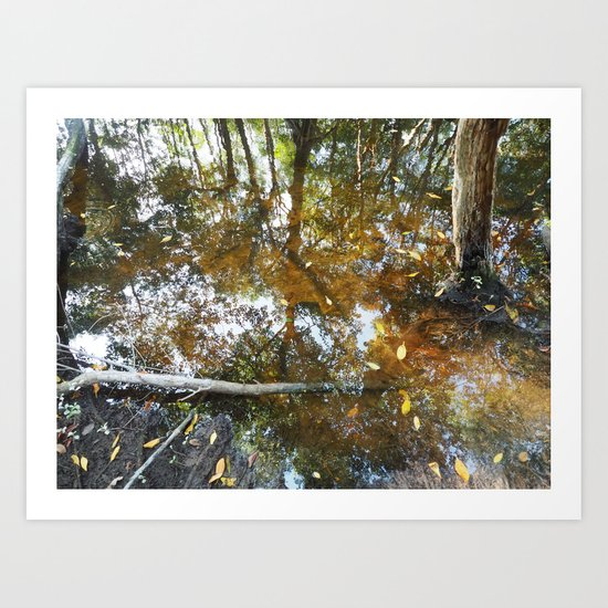 Swamp Reflection Celestun Art Print