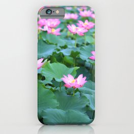Pink Lotus (Nelumbo nucifera) flowers and leaves in lake iPhone Case