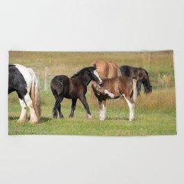 Gypsy_Vanner Foals 0371 - Colorado Beach Towel