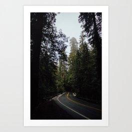 Redwoods pt. 3 Art Print