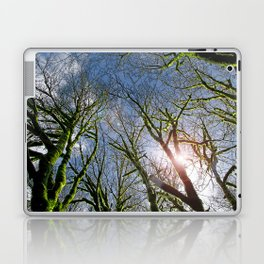 RAIN FOREST MAPLES REACHING FOR THE SKY Laptop & iPad Skin