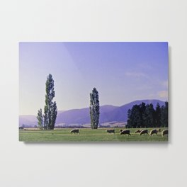 Canterbury Sheep Metal Print