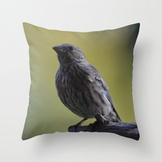 An Immature House Finch Throw Pillow
