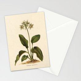 1800s Lithograph Amazon Lily, Eucharis Amazon Grandiflora Flower Stationery Cards
