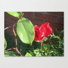 a rose Canvas Print