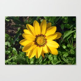 Is It Summer Yet? Canvas Print