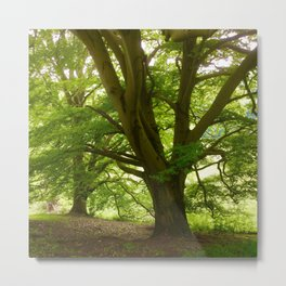 The Oldest Tree On Haresfield Beacon Metal Print