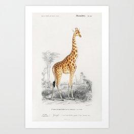 Vintage Giraffe with Landscape Background  Art Print