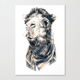 Saudi camel Canvas Print