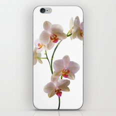 Orchid Spray iPhone & iPod Skin