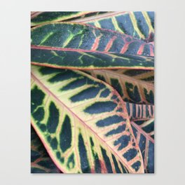 topical leaves Canvas Print