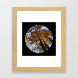Tree from below Framed Art Print